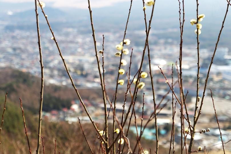kawaguchiko-andwhynott