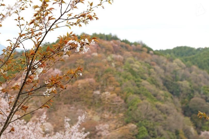 yoshino-nara-andwhynott